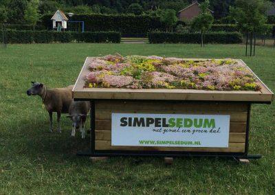 schapenverblijf simpel sedum showtuin venlo